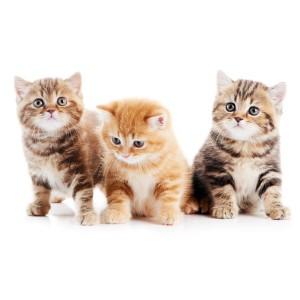 Tre kattunger